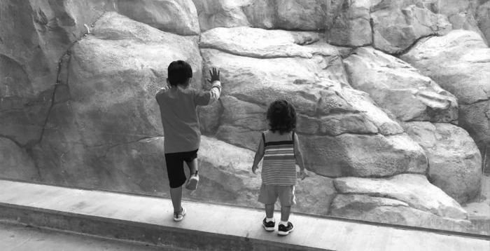 boys at the zoo